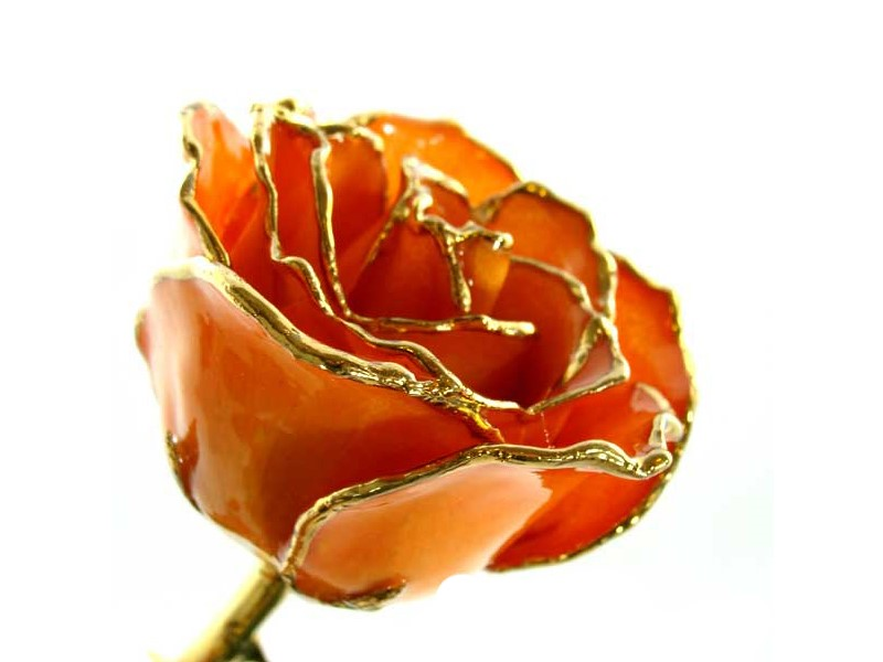 24K Gold Everlasting Rose - Apricot by 24K Rose